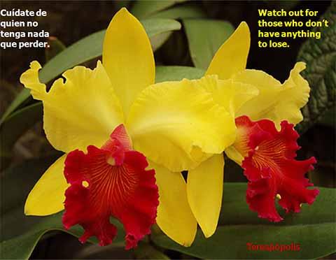 eForo Bolivia » Orquideas – clip – 24.10.2012